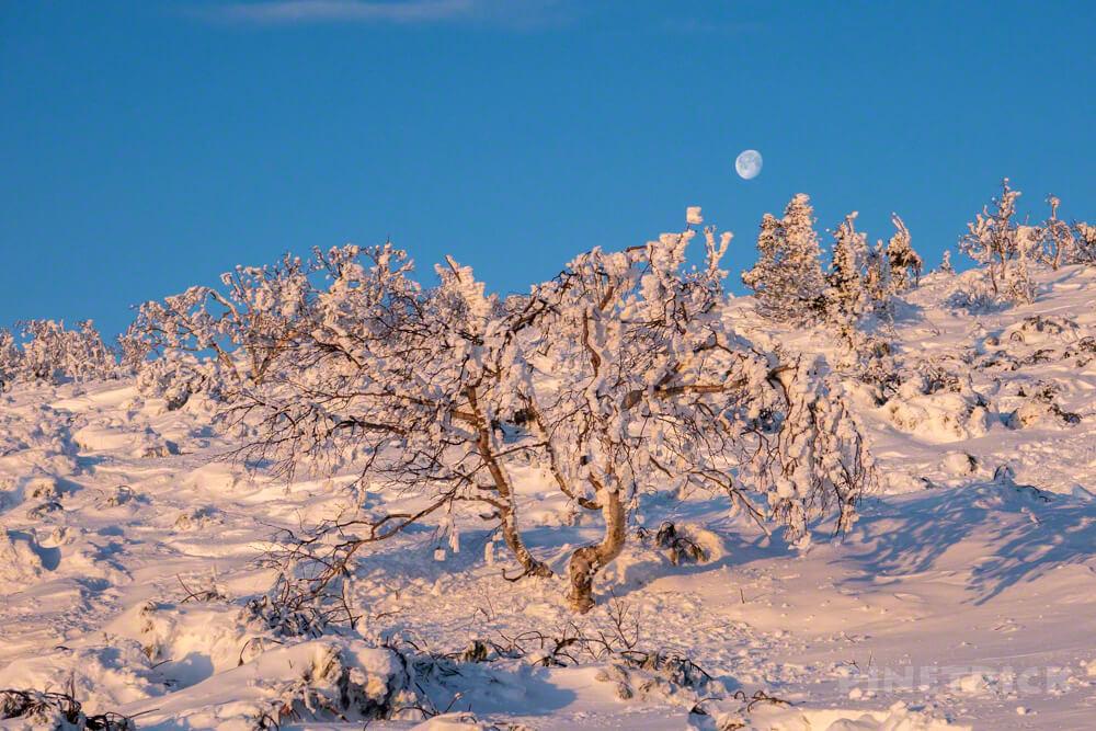 樹氷 月 藻琴山 北海道 冬山 登山 オレンジ色 道東