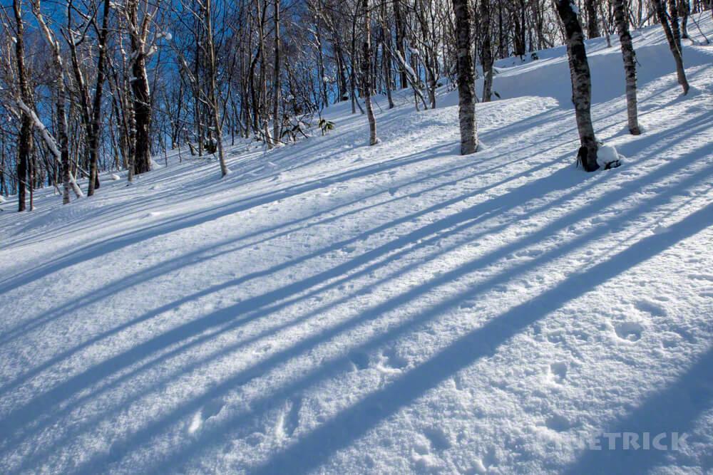 イチャンコッペ山 登山 冬山 北海道 樹林帯 影