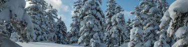 旭岳スキーコース 樹氷 絶景 モンスター 雪原 北海道 冬山 登山