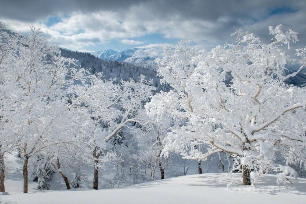 旭岳スキーコース Cコース 樹氷 冬山 登山 北海道 モンスター