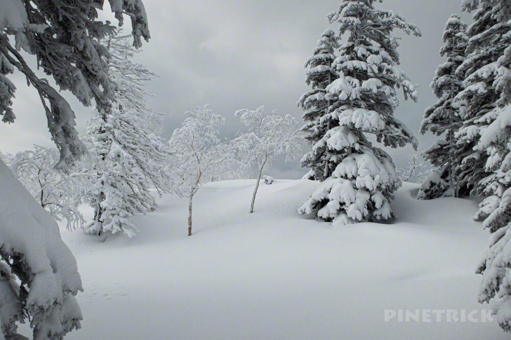樹氷 雪原 旭岳スキーコース Cコース 冬山 北海道 登山 モンスター