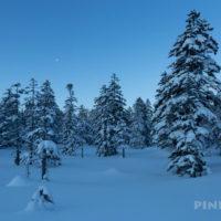 旭岳温泉自然探勝路 大雪山 スノーシュー クロスカントリー 樹氷 樹林帯 おすすめスポット 穴場