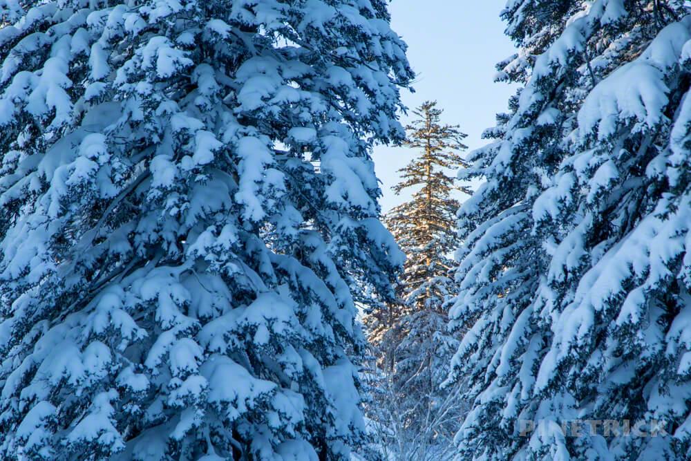 自然探勝路 大雪山旭岳 アクティビティ クロスカントリースキー スノーシュー 樹氷 モンスター
