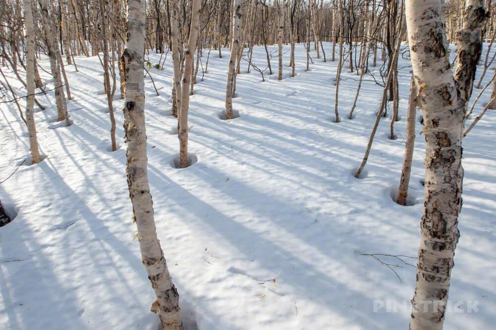 岩内岳 冬山 登山 北海道 スノーシュー バックカントリー スキー スノーキャット 岩内国際スキー場 白樺