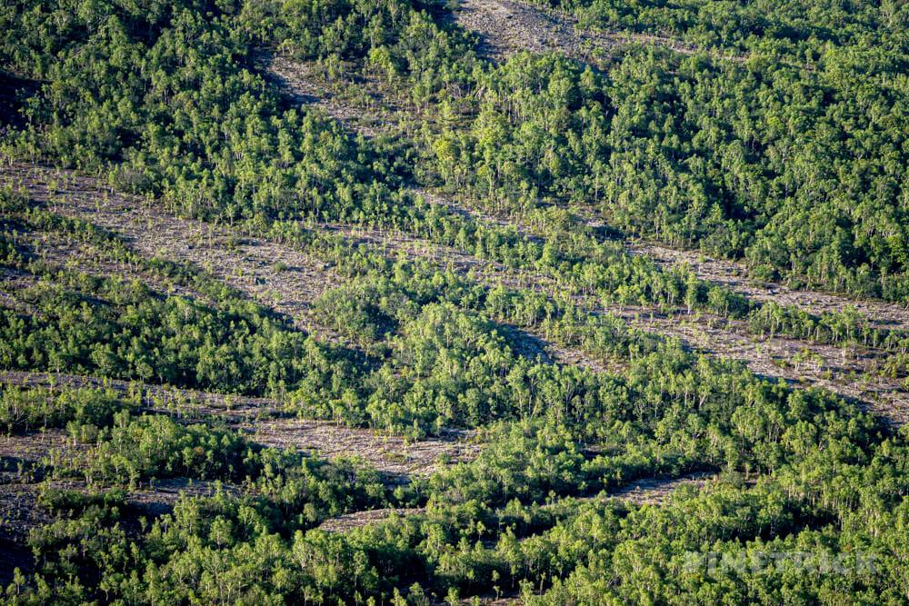 樽前山 樹林帯 北海道 登山