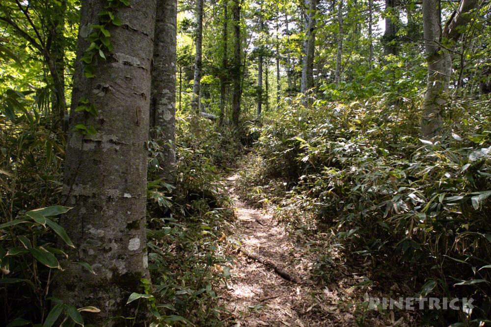 風不死岳 登山道 樹林帯 北海道 木漏れ日