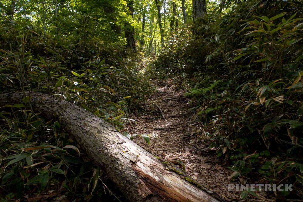 風不死岳 登山道 樹林帯 北海道 木漏れ日 急登 倒木