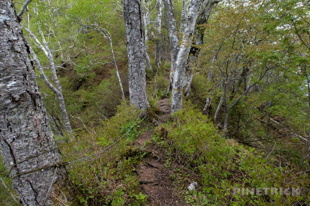 風不死岳 登山道 樹林帯 北海道 木漏れ日 細道 倒木