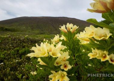 樽前山 東山山頂 ウコンウツギ お花畑コース 花見