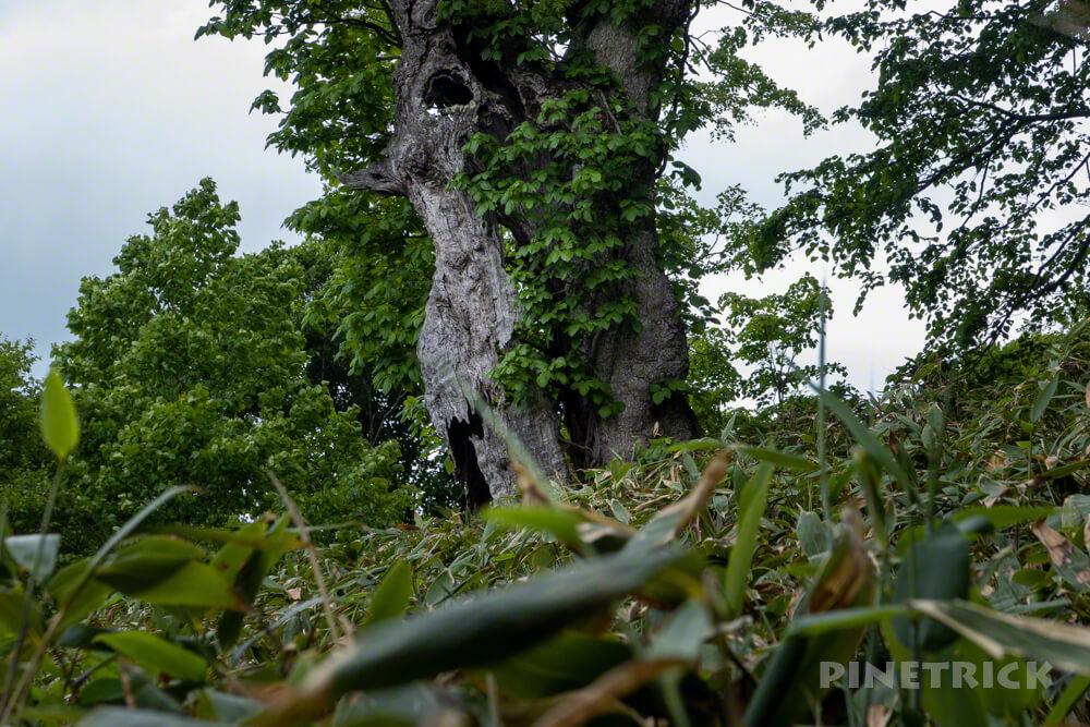 神居尻山 登山口 駐車場 Bコース 道民の森 北海道 シンボル 老木