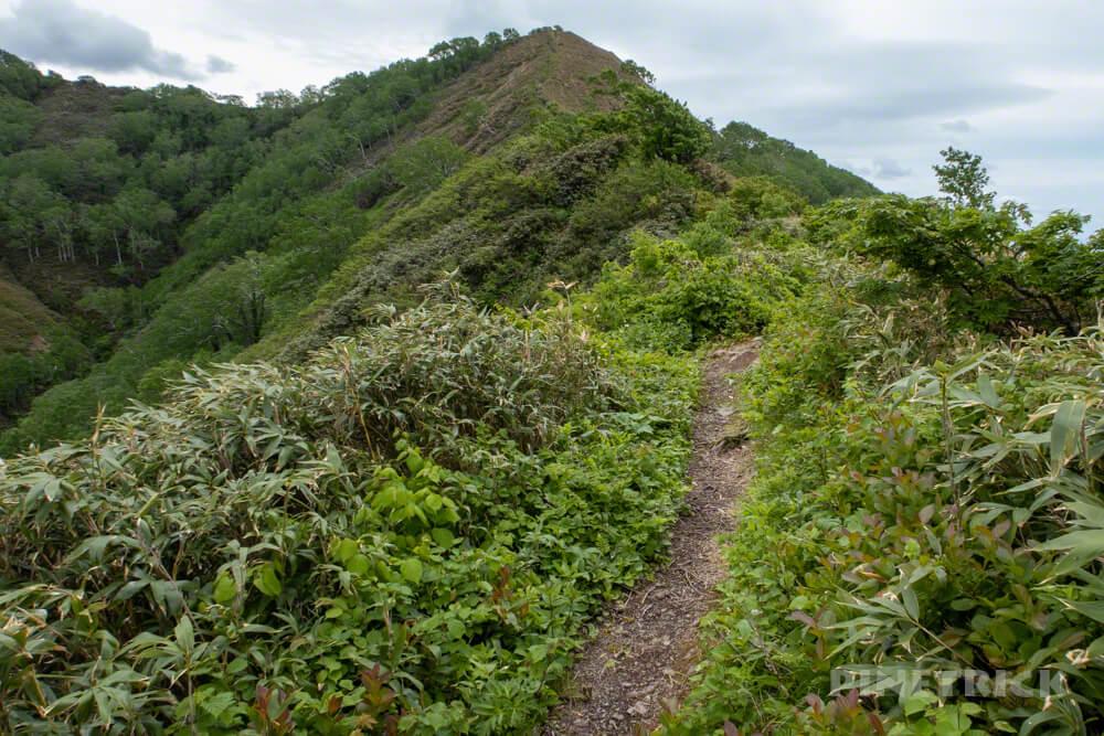 神居尻山 Bコース 稜線 分岐 北海道 登山 道民の森