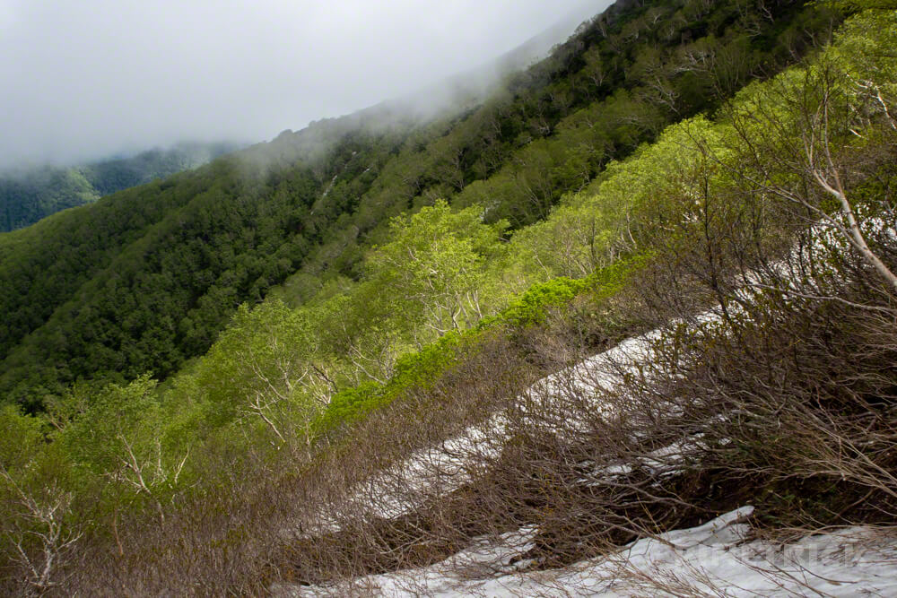 北戸蔦別岳 チロロ林道 千呂露川・二岐沢コース 登山口 北海道 樹林帯 山頂