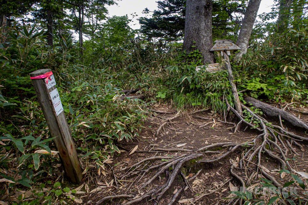 夕張岳 冷水コース 馬の背コース 合流地点 登山 北海道