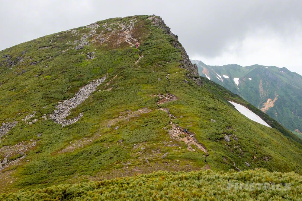 十勝岳連峰 三峰山 縦走 ハイマツ 登山 北海道