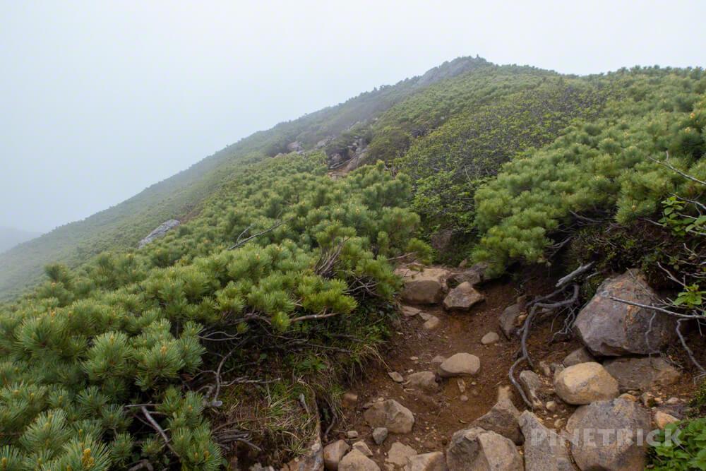 富良野岳 花の百名山 ガス 登山 北海道