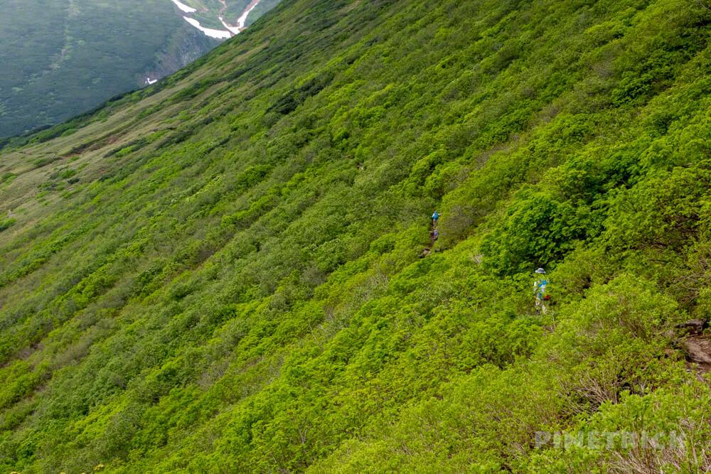富良野岳 下山 花の百名山 登山 北海道