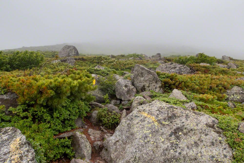 緑岳 岩場 ナキウサギ 北海道 大雪山
