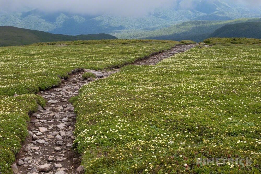 忠別岳 山頂 チングルマ