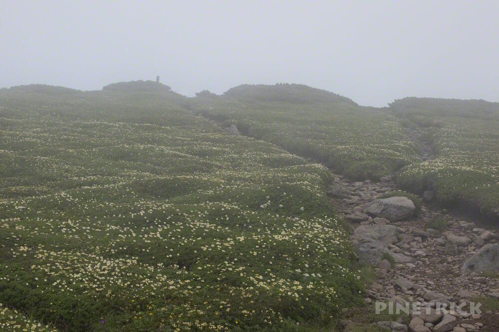 忠別岳 山頂 チングルマ 高山植物 縦走 北海道
