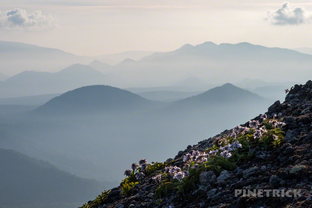 樽前山 サンセット登山 タルマエソウ 多峰古峰山 932峰 北海道