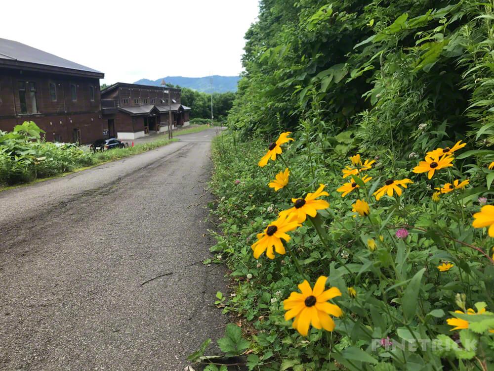 神居尻山 登山 道民の森 神居尻地区 iPhone7plus  北海道 花