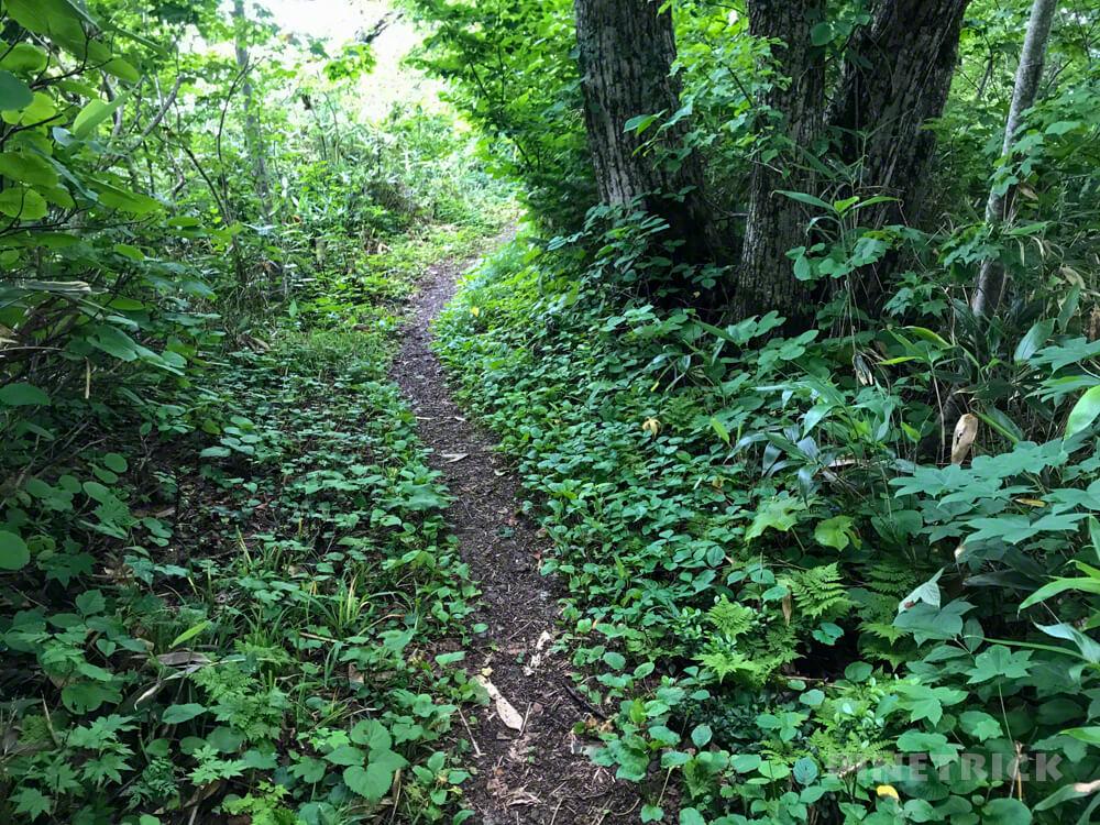 神居尻地区 道民の森 Cコース 登山 神居尻山 北海道 iPhone7plus 稜線