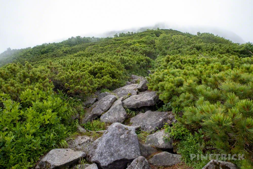 暑寒別岳 登山 暑寒ルート 北海道
