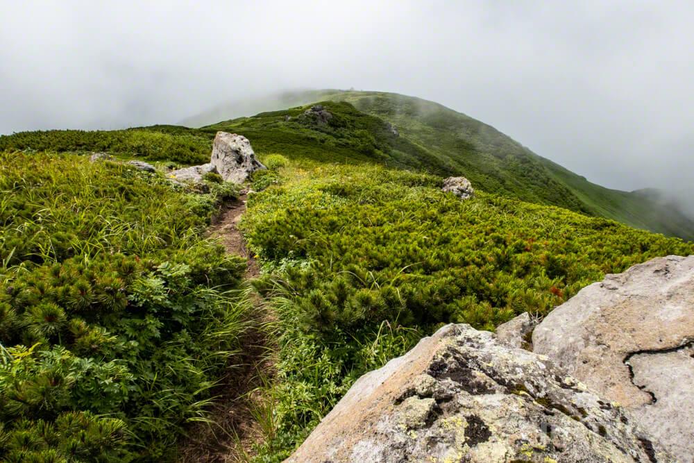 暑寒別岳 登山 暑寒ルート 北海道 ハイマツ帯 箸別ルート