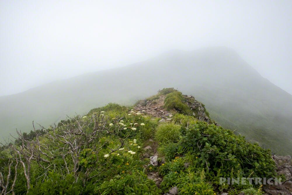 暑寒別岳 登山 暑寒ルート 北海道 ハイマツ帯 箸別ルート 山頂  雨竜ルート