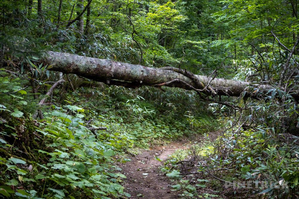 不死岳 登山 北海道 北尾根 倒木