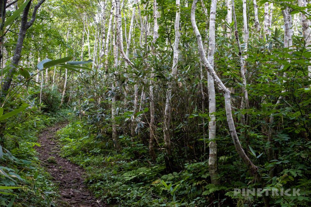 岩内岳 登山口 駐車場 いわないリゾートパーク 北海道 白樺