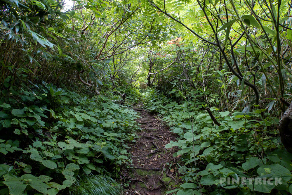 岩内岳 登山口 いわないリゾートパーク 岩内町 絶景 北海道 白樺 ナナカマド