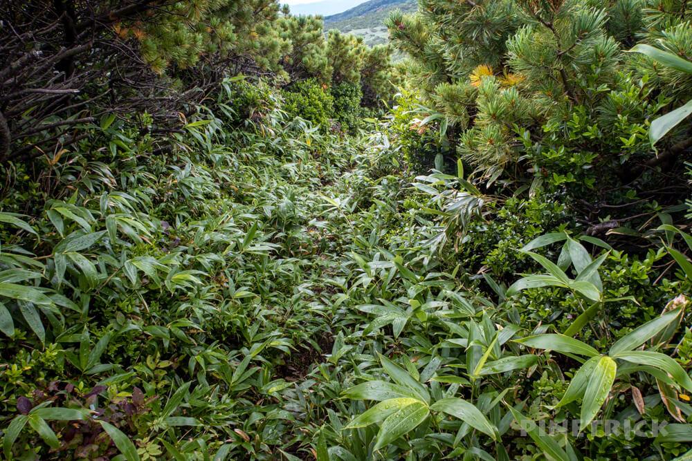 岩内岳 雷電山 分岐 笹薮 登山 北海道 いわないリゾートパーク