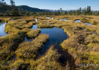 松仙園登山道  草紅葉 二の沼 三の沼 アカエゾマツ 湿原 沼の平 愛山渓温泉