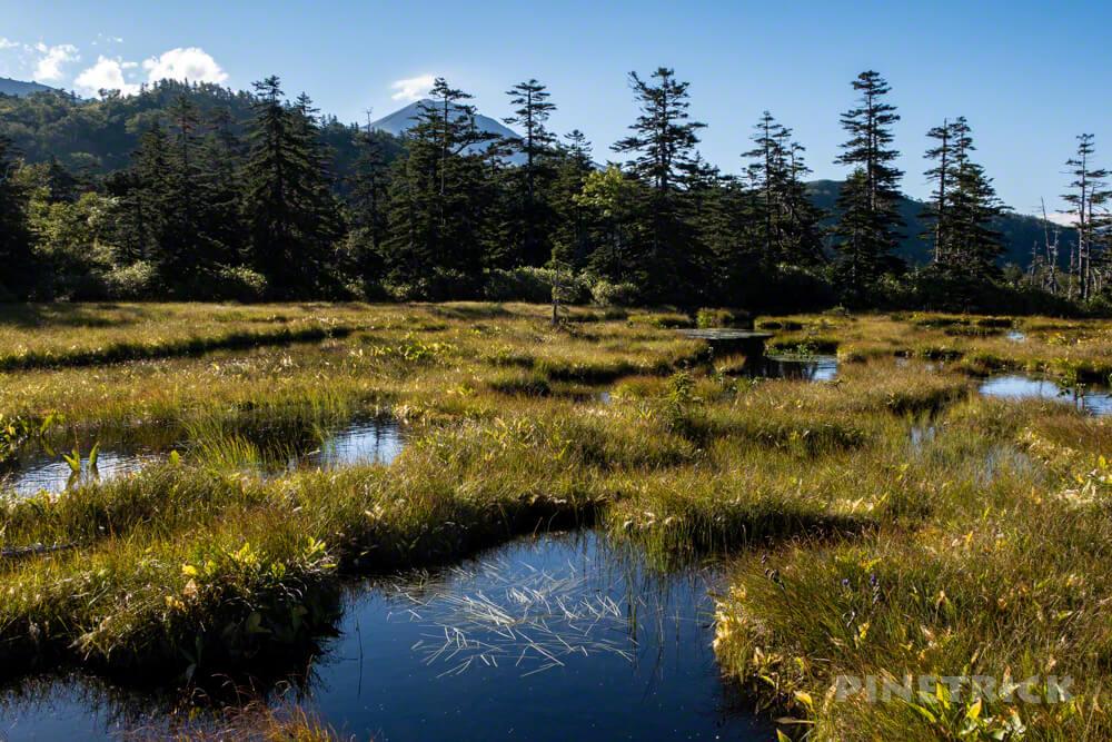 松仙園登山道 二の沼 三の沼 アカエゾマツ 湿原 沼の平 愛山渓温泉