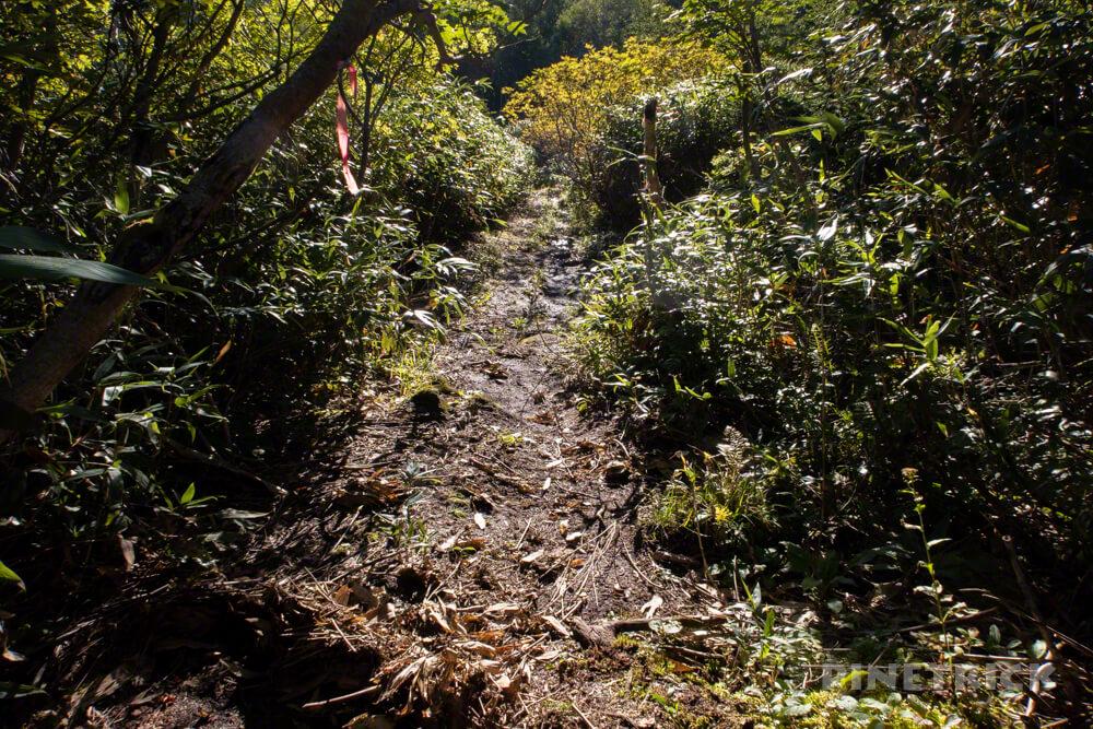 松仙園登山道  アカエゾマツ 湿原 沼の平 愛山渓温泉