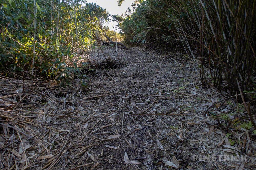 松仙園登山道  アカエゾマツ 湿原 沼の平 愛山渓温泉 整備 笹刈