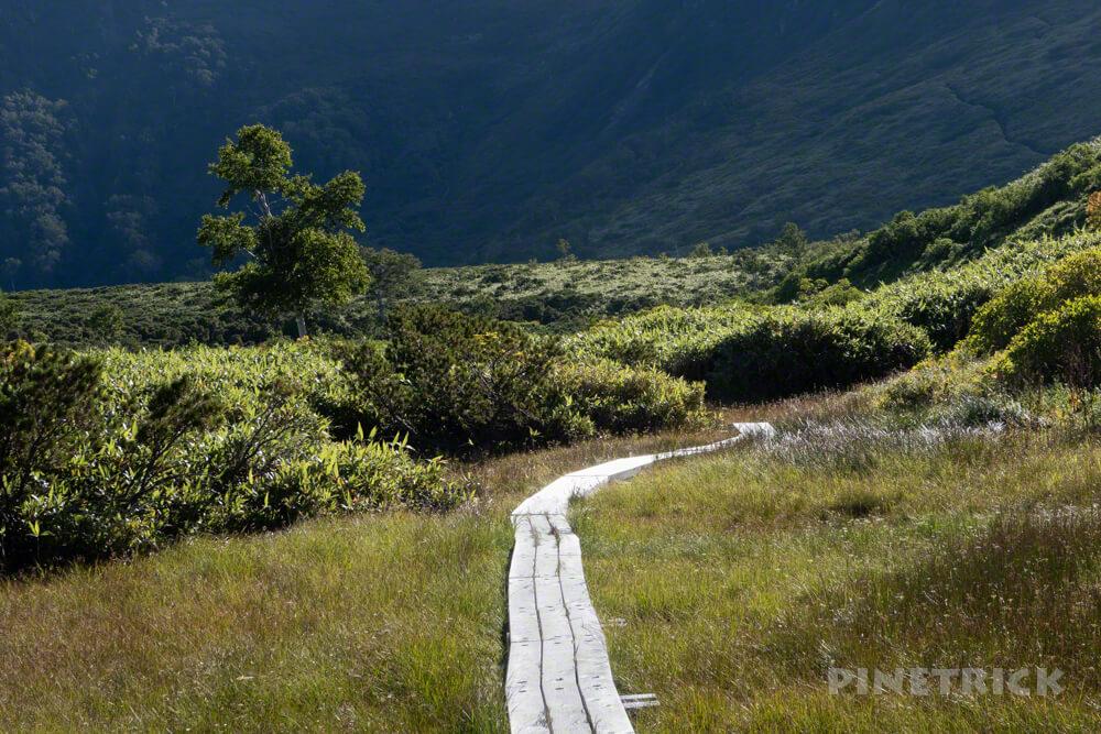 松仙園登山道  アカエゾマツ 湿原 沼の平 愛山渓温泉 木道