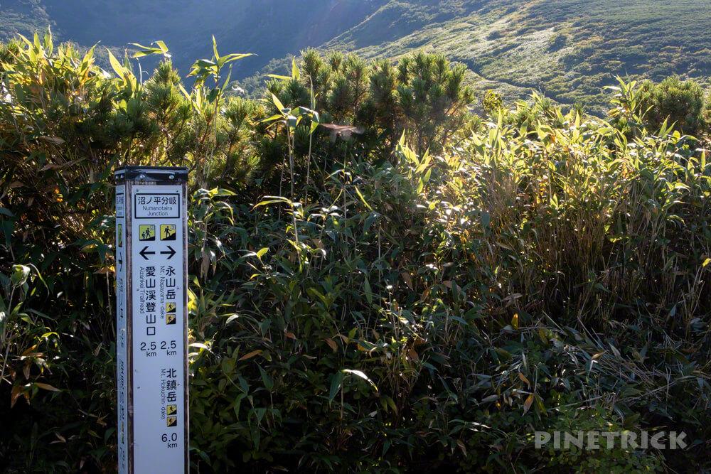 松仙園登山道  アカエゾマツ 湿原 沼の平 愛山渓温泉 永山岳 分岐