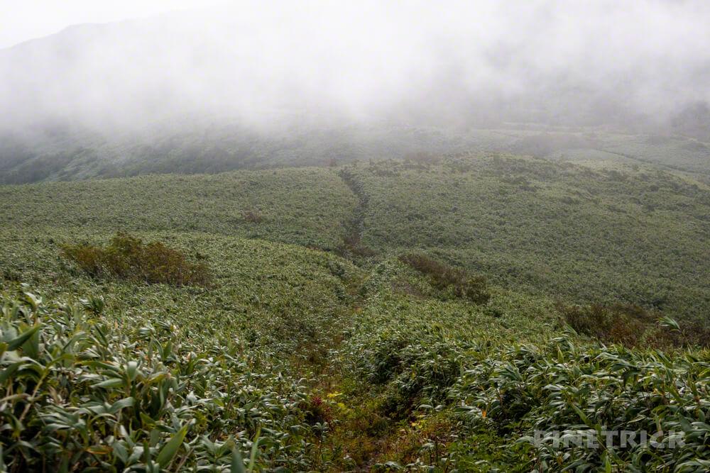 ニセコ シャクナゲ岳 登山 北海道