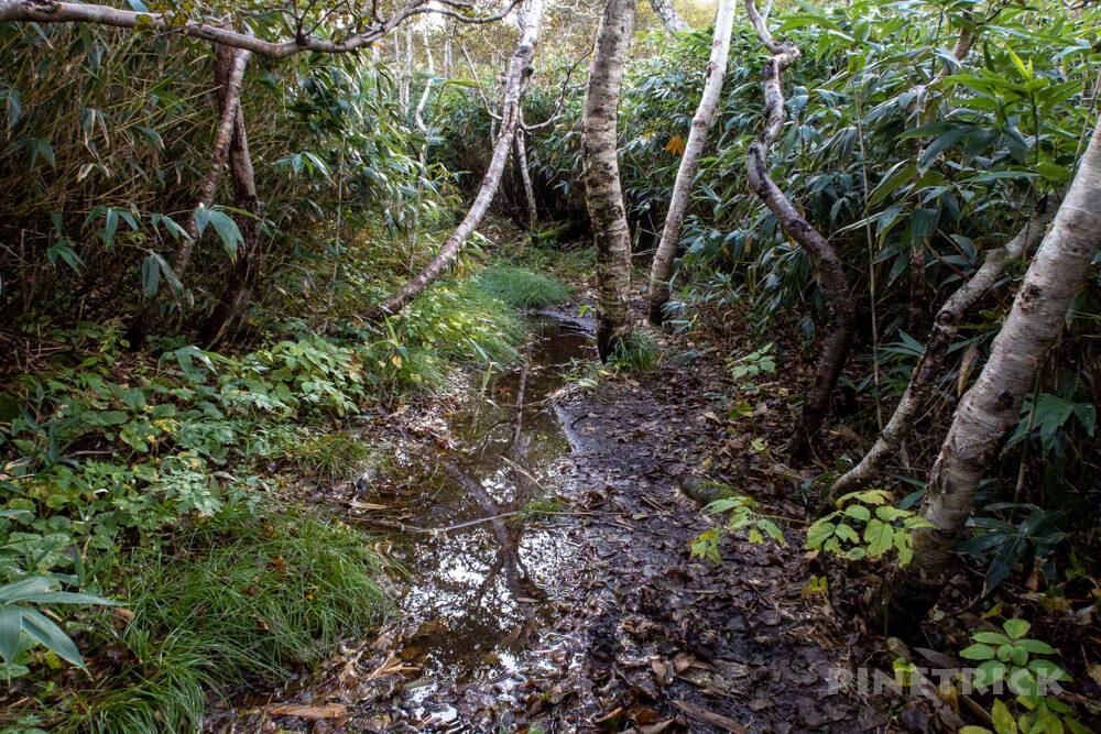 ニセコ シャクナゲ岳 登山 北海道 泥濘 水たまり