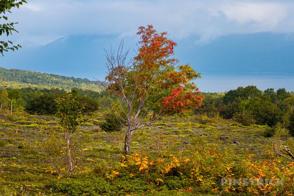 樽前山 お花畑コース 登山 北海道 ナナカマド 紅葉