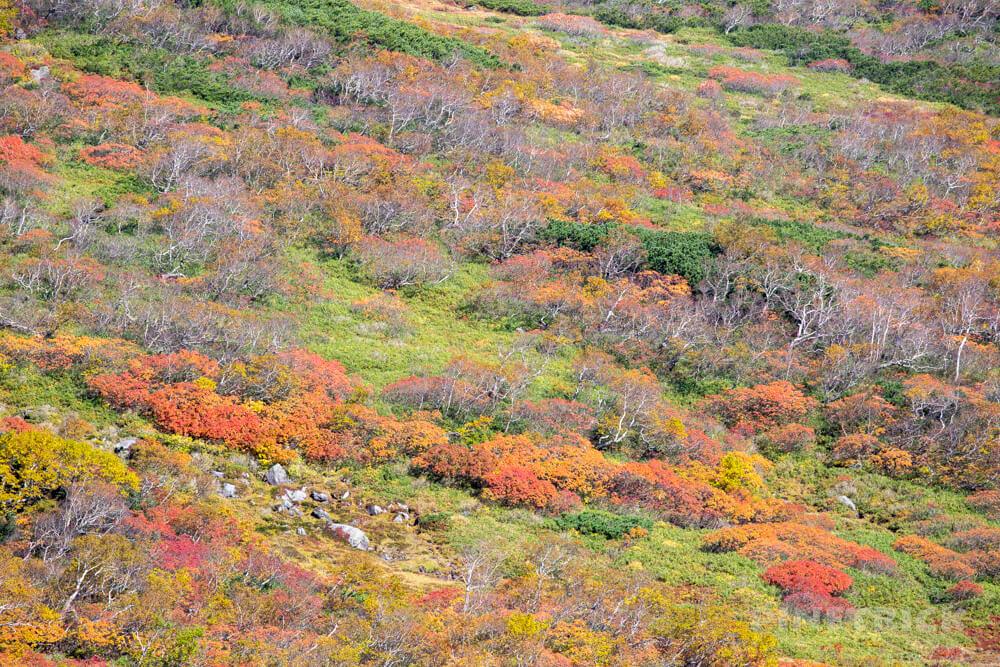 トムラウシ山 大雪山 登山 短縮コース 北海道 紅葉 トムラウシ公園 雪渓