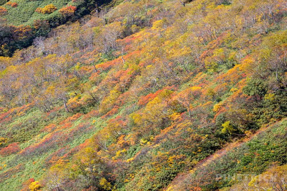 トムラウシ山 大雪山 登山 短縮コース 北海道