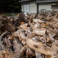 定山渓ダム 流木 無料配布 薪ストーブ アウトドア