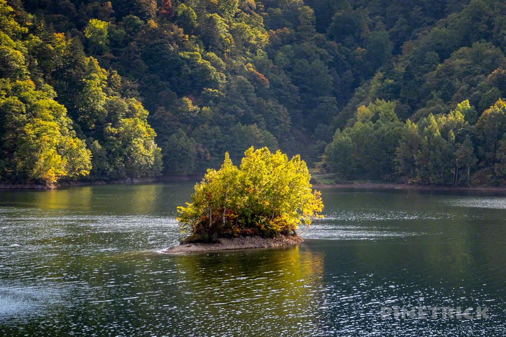 定山渓ダム 流木 無料配布 薪ストーブ アウトドア 紅葉