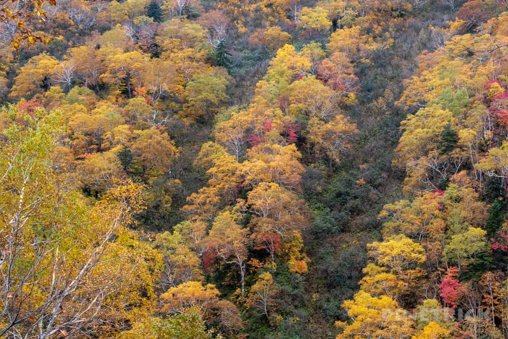 天塩岳 登山 北海道 旧道コース 紅葉
