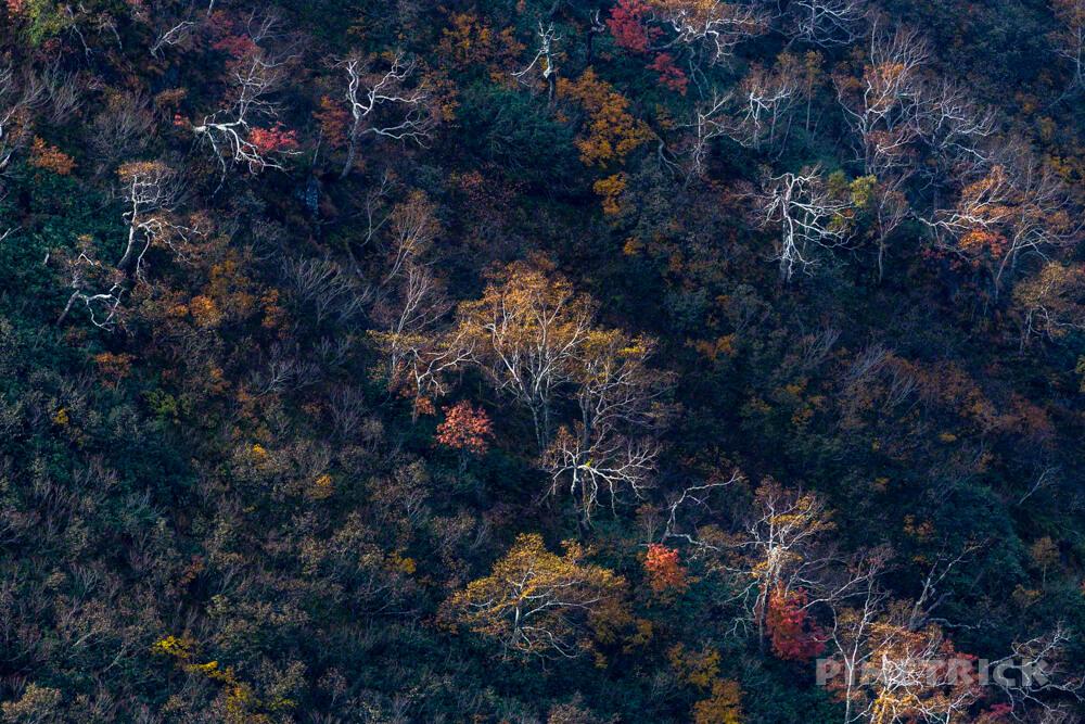 天塩岳 前天塩岳 登山 雪 山頂 旧道コース 北海道 紅葉 ダケカンバ