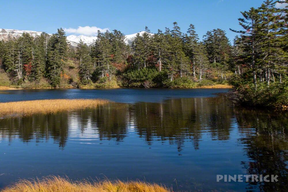 大雪高原温泉 沼めぐり 紅葉 ヒグマ情報センター 北海道 緑沼