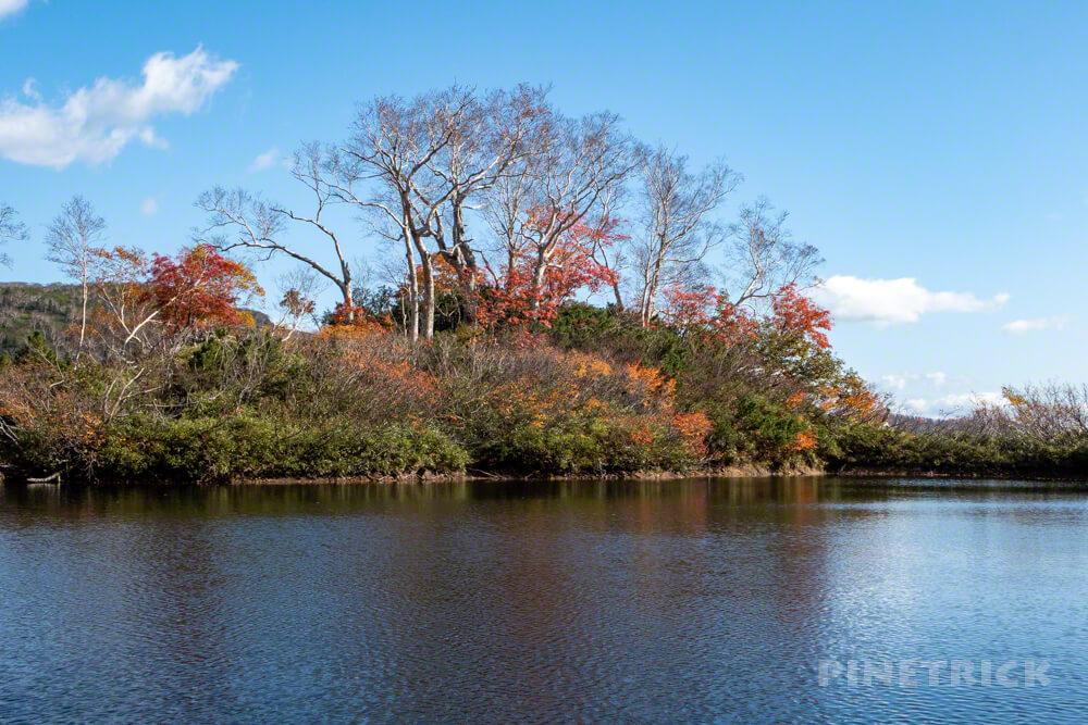 大雪高原温泉 沼めぐり 紅葉 ヒグマ情報センター 北海道 エゾ沼